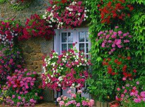 14 Gambar Taman Bunga Depan Kamar Indah 8