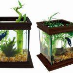 15 Desain Contoh Model Aquarium Minimalis