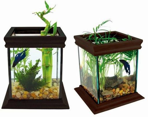 15 Desain Contoh Model Aquarium Minimalis Rumah Impian