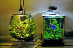 15 Desain Contoh Model Aquarium Minimalis2