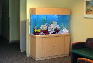 15 Desain Contoh Model Aquarium Minimalis3