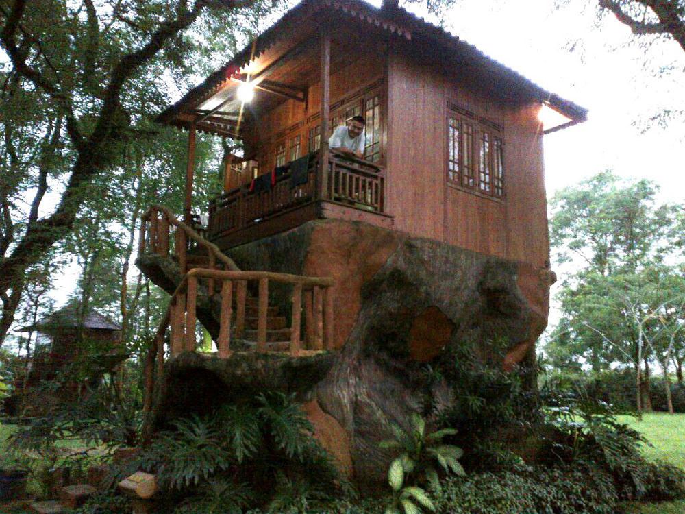 pohon rumah minimalis
