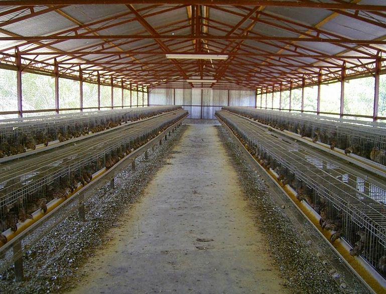 12 Desain Kandang Ayam Petelur dan Broiler Modern | RUMAH ...