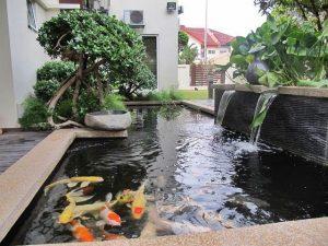 contoh desain kolam ikan hias minimalis | rumah impian